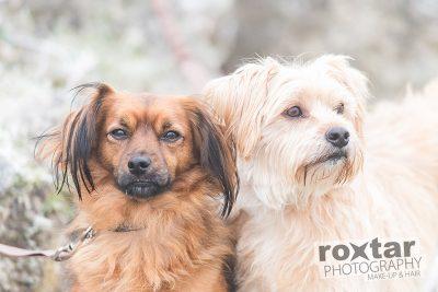 Hunde Shooting - Mischlinge © roxtar