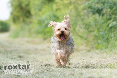 Haustier Shooting - Hund © roxtar