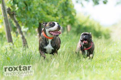 Hunde Shooting - Aktion © roxtar