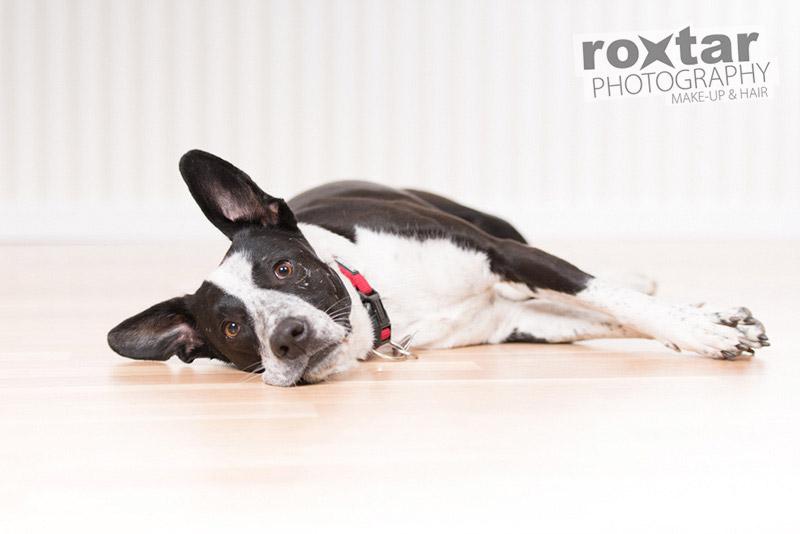 Hunde Shooting - Mischling © roxtar